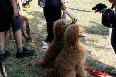 כלבים מגזעים שונים השתתפו ביום למען הכלב בתל אביב