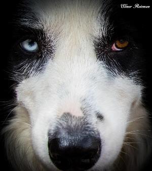 בקורס מאלפי כלבים לומדים להכיר את הכלב לחיים משותפים מלאים יותר