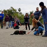 תמונה בשיעור מעשי בבית הספר לאילוף כלבים מאי דוג