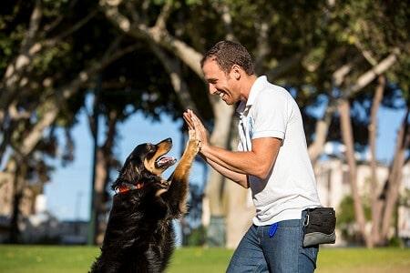 אילוף כלבים מקצוע משלב תשוקה ואהבה לכלבים