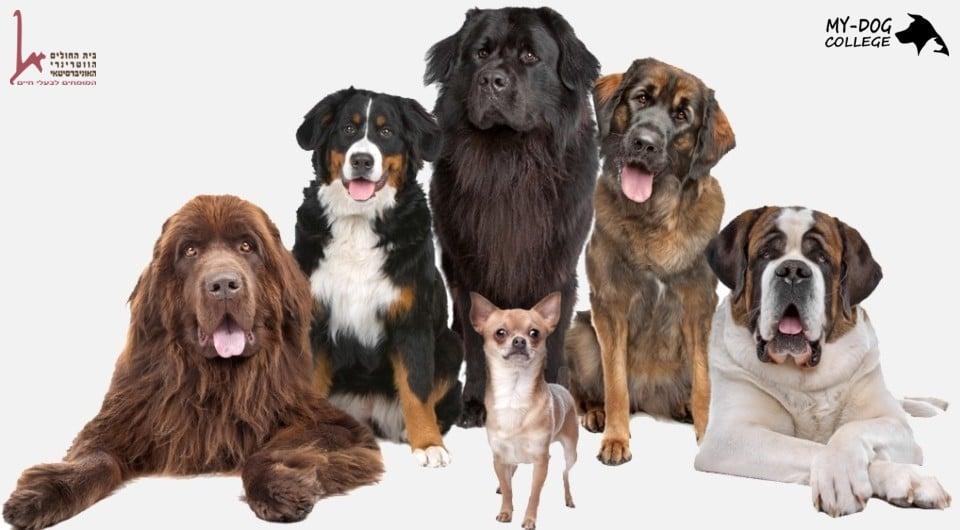 """כלבים מגזעים שונים, לוגו מאי דוג, לוגו בי""""ח ווטרינרי"""
