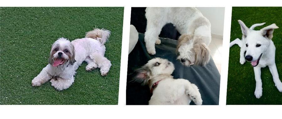 כלבים במעון יום לכלבים, פנסיון לכלבים, מרכז הארץ