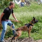 קורס כלבי עבודה, כלבי שמירה, מכין מאלפים לכלבים ייעודיים