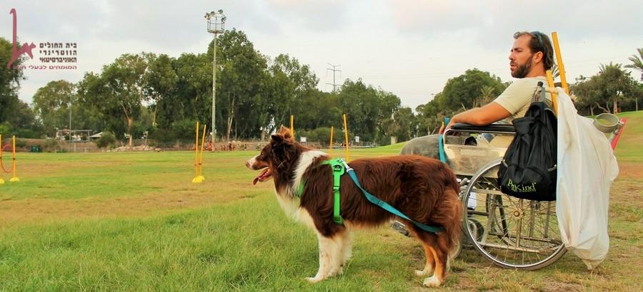 כלב שירות מסייע לאדם מוגבל על כיסא גלגלים