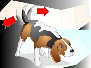 איור של כלב מקשקש בזנב ורוצה לשחק