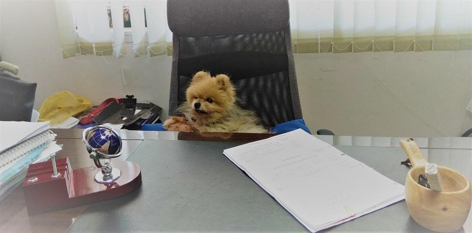 כלב יושב במשרד , מנהל החברה