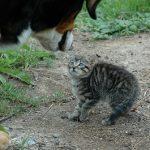 כלב מרחרח גור חתולים