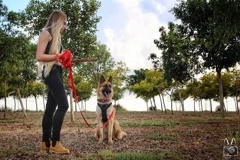 תמונה מקורס אילוף מעשי, כלב זאב ותלמידה בחורשה