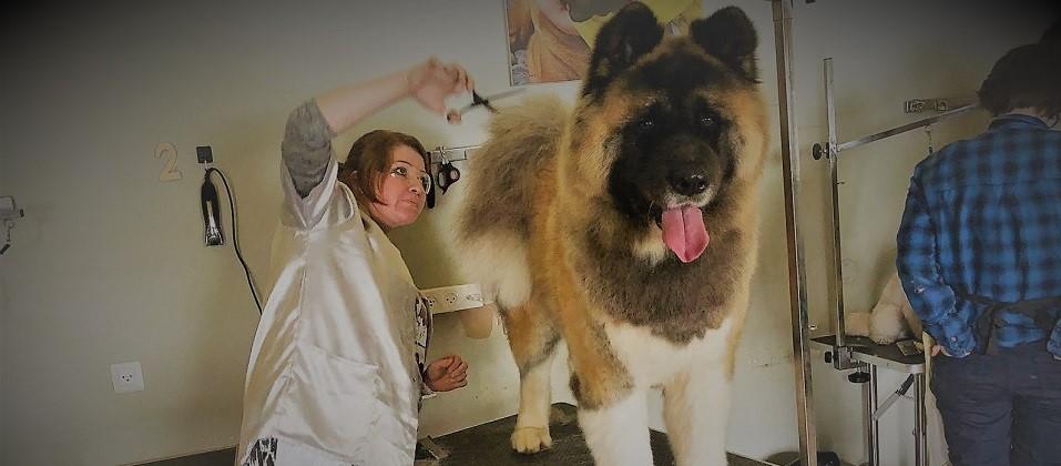 כלב גדול נמצא במספרת כלבים