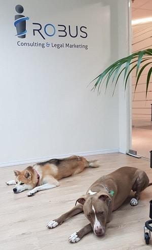 כלבים נחים במשרד. האם להביא כלב לעבודה?