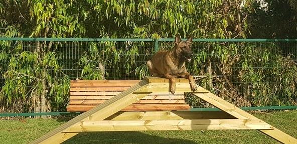 כלב על מתקן בגינת כלבים