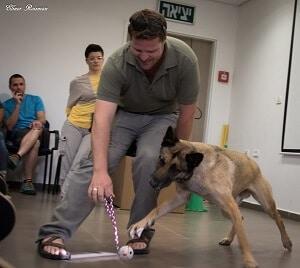 כלב משתתף בשיעור אילוף, תופס כדור