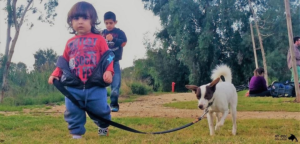 ילד מוליך כלב בפארק, ילדים וכלבים