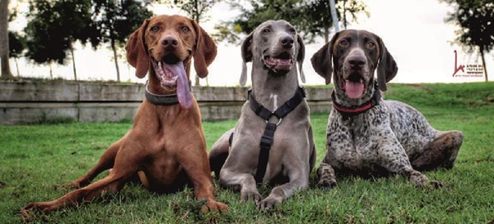 כלבים בפארק, פעילות העשרה באילוף כלבים, כלבנות טיפולית, מאלפי כלבים