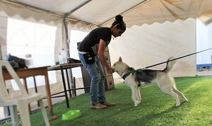 בקורס לומדים אילוף כלבים בגישה חיובית force free