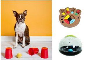 סוגים שונים של משחקים לכלבים