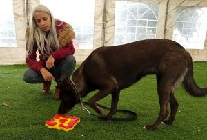 מאלפת כלבים בשיעור עם משחק פזל לכלבים