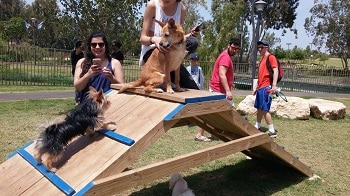 כלבים וגורים משחקים על מתקן בגינת כלבים