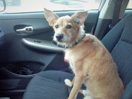 כלב נוסע באוטו, הוראות הגעה לפגישות ייעוץ לימודים