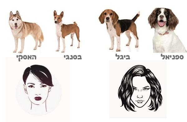 שיער ואוזניים של כלבים מזכירים תסרוקות של נשים