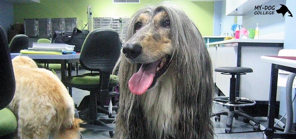 צוברים נסיון מקצועי במספרה לכלבים מאי דוג