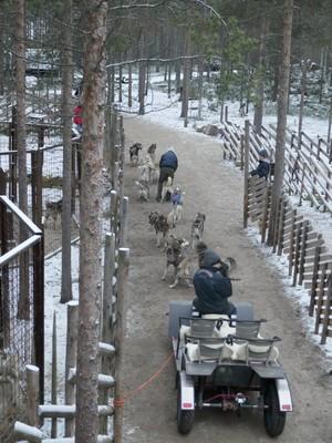 מזחלת רתומה לכלבי האסקי עם תיירים יוצאת לסיור