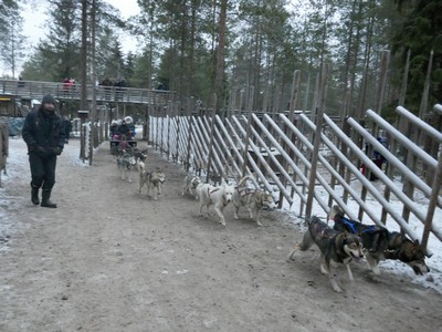 אימון כלבי עבודה לעבודת צוות טיול מזחלת