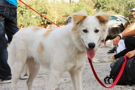 כלב יכול להנות גם בקיץ אם הוא מוגן מחום יתר