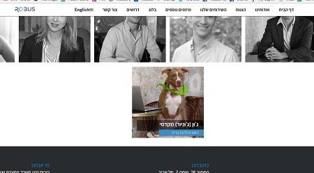כלב בדף של אתר חברה משפטית