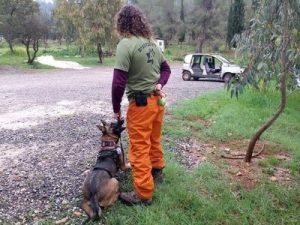 כלב זאב, כלב עבודה באימון