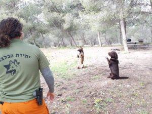 2 כלבים יושבים ומאמן יחידת הכלבנים