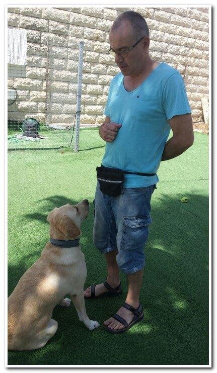 אילוף כלבים באזור מעלה אדומים או ירושלים. גישה חיובית force free