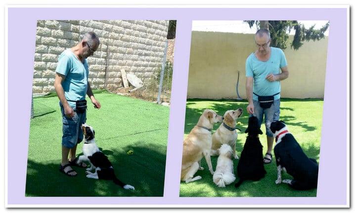 מיכאל סוחין מאלף כלבים בכיר, מומחה לבחירת גורים