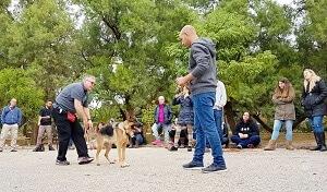 לימוד אילוף כלבים בגישה טבעית nature way, כלבים בשיעור אילוף
