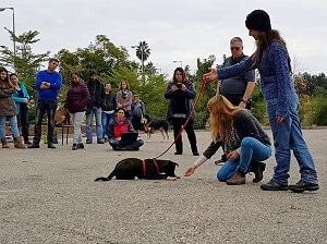 כלב ותלמידים בקורס לומדים אילוף כלבים בגישה טבעית nature way