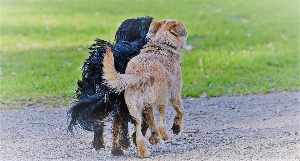 שני כלבים שעוזרים במחלקה בטיפול בעזרת כלבים