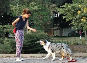 כלב וסטודנטית, לימוד אילוף כלבים בגישה מודרנית neo classic