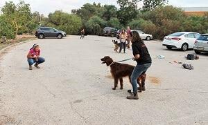 מהלך שיעור אילוף כלבים בגישה חדישה neo classic