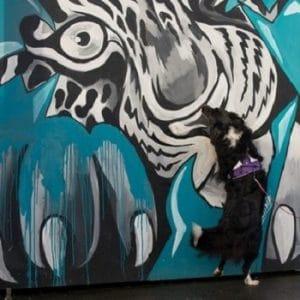 כלב מחפש בעזרת ריח על קיר צבעוני