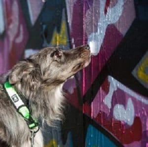 כלב מריח נקודות מפוזרות בשטח על הקיר