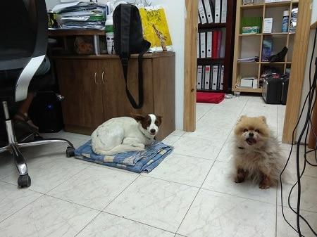 2 כלבים יושבים במשרד