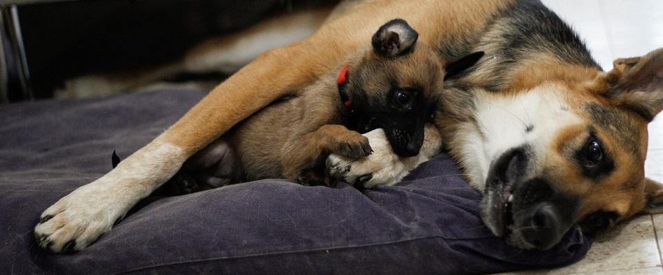 כלבה עם גור שוכבים על מיטת כלבים