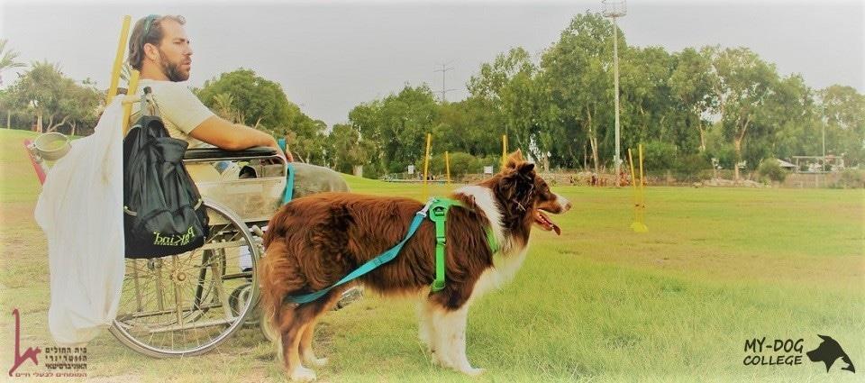 כלב שירות עוזר לבני אדם להגיע ממקום למקום