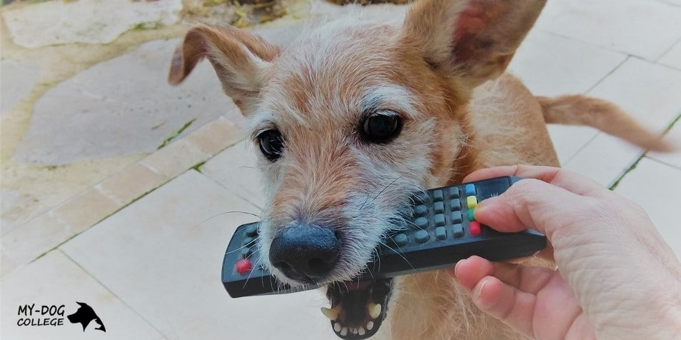 כלב מביא שלט טלויזיה לאדם, לארס ראם