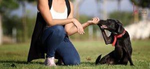 לחיצת יד מאלפת כלבים וכלב.