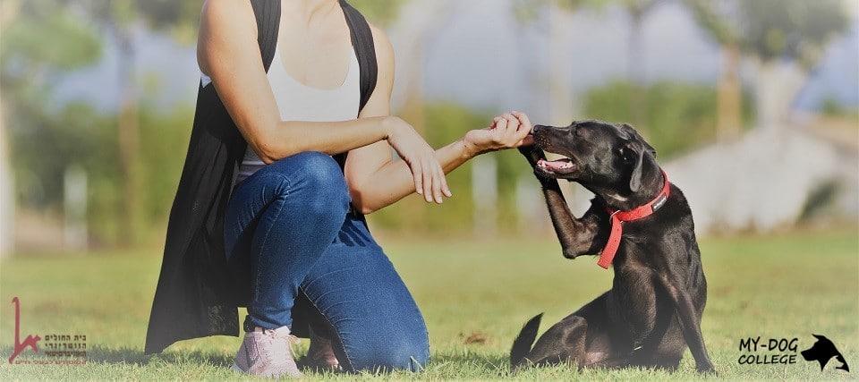 מסיימי קורס אילוף כלבים עובדים עם כלבים