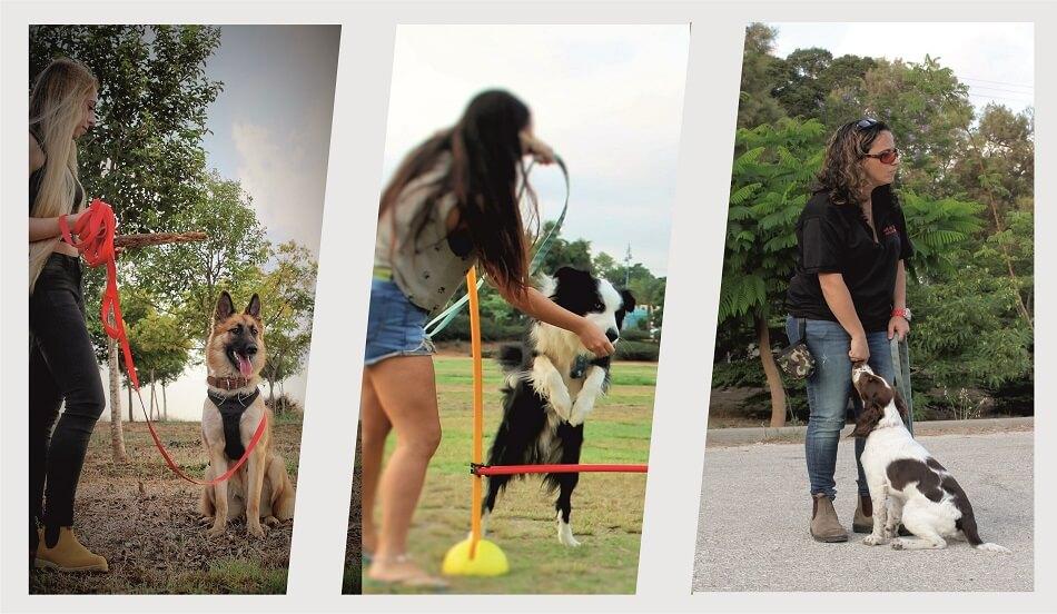 סטודנטים בקורס מאלפי כלבים נותנים שיעורי אילוף וסדנאות אילוף כלבים