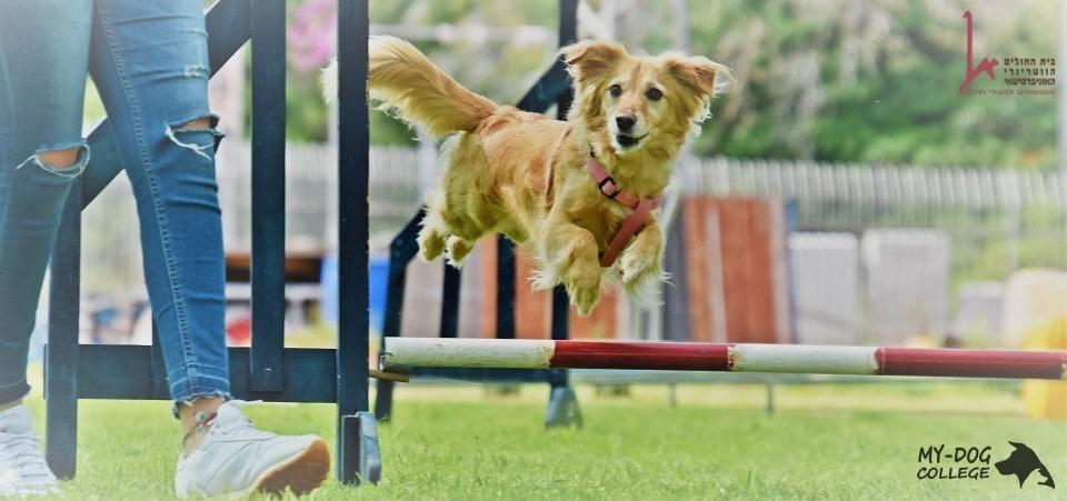 כלב באימון ספורט כלבני, אג'יליטי