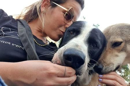 טיפול בעזרת כלבים, תמונת אנשי צוות