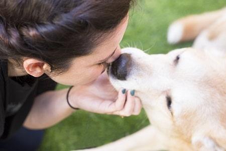 מעיין מדריכה לכלבנות טיפולית, סיוע לבני אדם בעזרת כלבים
